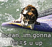 Cat versus ocean